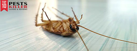How to get rid of roaches - best advices
